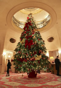 cb2b1fa14f329 We supply large trees each year to some of the finest hotels in the  country, stately homes, council authorities, leisure complexes.